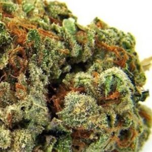 Chocolope Sativa Strain UK