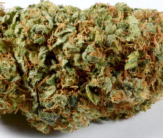 Kosher Kush Indica Strain UK