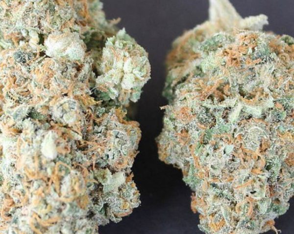 Moby Dick Sativa Strain