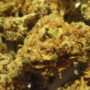 Orange Kush Indica Strain UK
