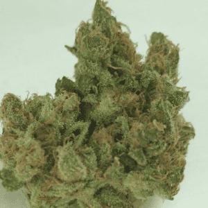 Mail Order Cannalope Haze Cannabis Strain