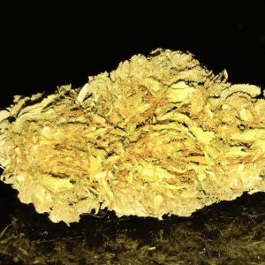 Mail Order Laughing Buddha Cannabis Strain