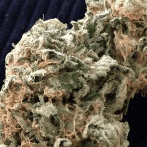 Mail Order Lemon Thai Cannabis Strain
