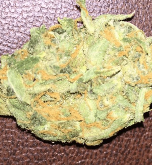 Mail Order Mango Haze Cannabis Strain