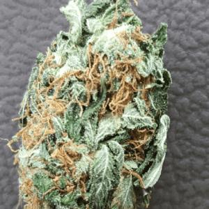 Mail Order White Rhino Marijuana Strain