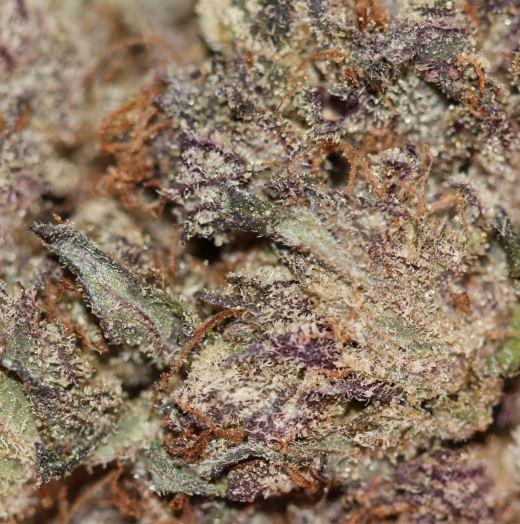 Order Black Diamond Marijuana Strain