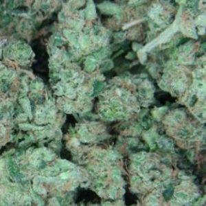Mail Order NYC Diesel Marijuana Strain